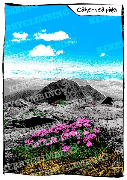 Caher Sea Pinks poster